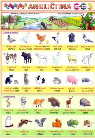 Obrázková angličtina 1 - Zvířata - Kupka Petr a kolektiv