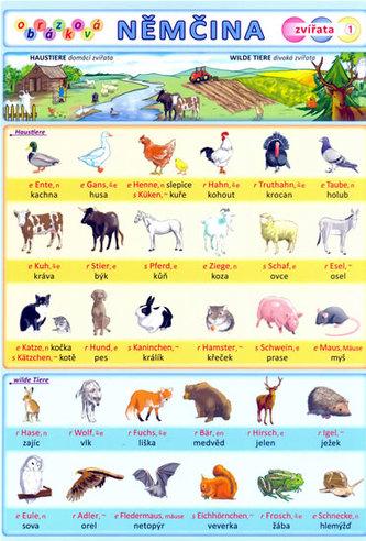 Obrázková němčina 1 - Zvířata - Kupka Petr a kolektiv