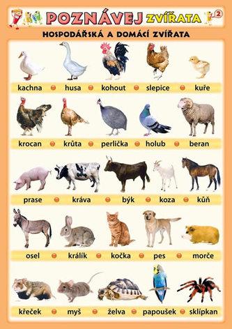 Poznávej zvířata - Hospodářská a domácí zvířata - Kupka Petr a kolektiv